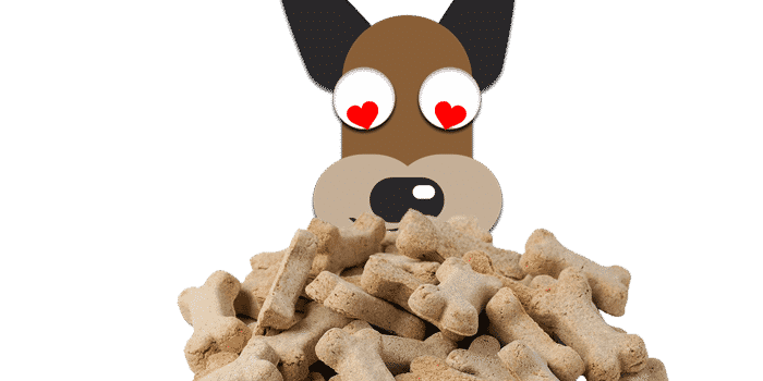 Best dog treats overview