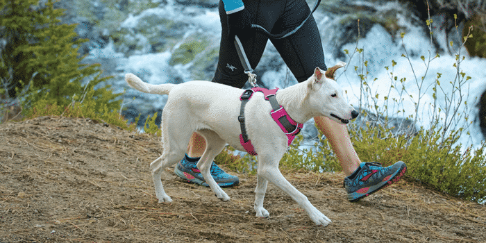 15 Best Dog Harnesses in 2019