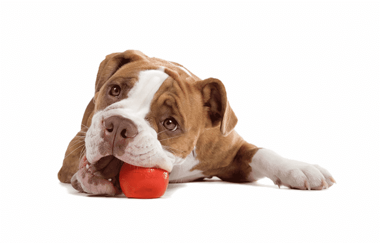 15 Best Dog Toys To Buy in 2019