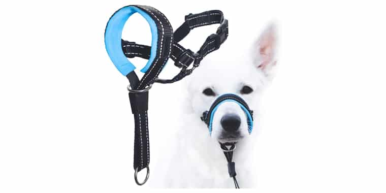 GoodBoy Dog Head Halter with Safety Strap