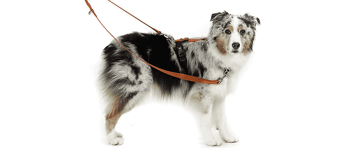 blue-9 pet products balance harness
