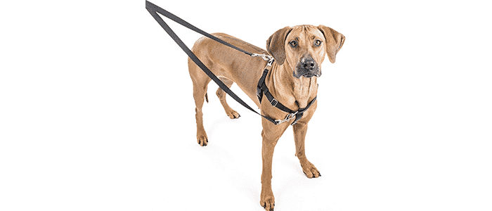 wiggles wags whiskers 2 hounds design freedom no-pull dog harness
