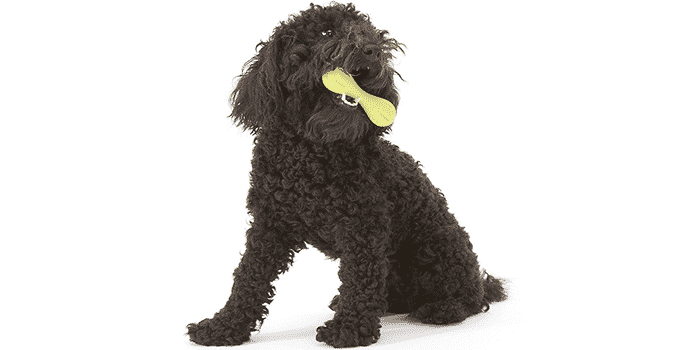 12 Best Chew Toys For Dogs In 2019 For All Types Of