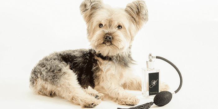 best dog colognes