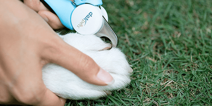 9 Best Dog Nail Clippers in 2019