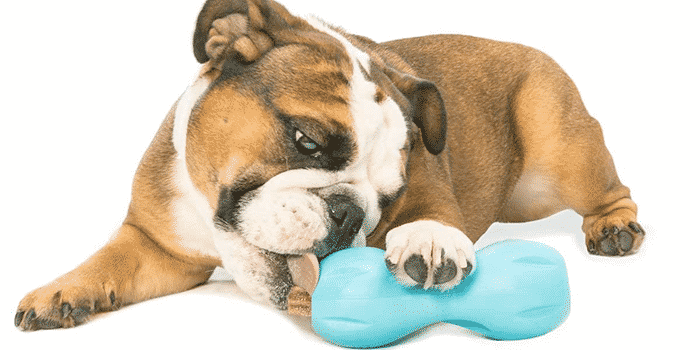 best interactive dog puzzle toys
