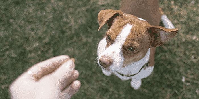 11 Best Dog Training Treats in 2019