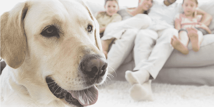 best flea and tick treatment and prevention for dogs