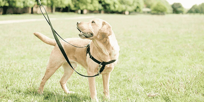 11 Best No Pull Dog Harnesses in 2018
