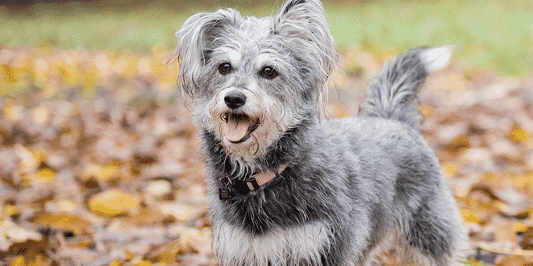 4 Best Dog DNA Tests in 2019