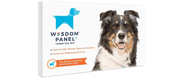 wisdom panel 3 0 breed identification dna test kit