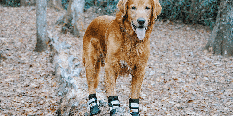 10 Best Dog Boots in 2020