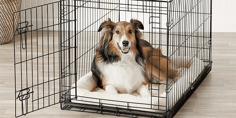 10 Best Dog Crates in 2020