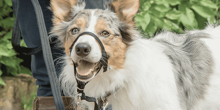 best dog head halters