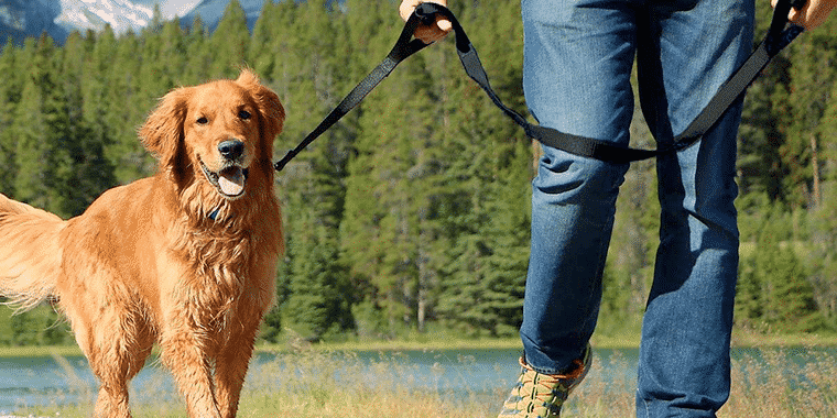 16 Best Dog Leashes in 2020