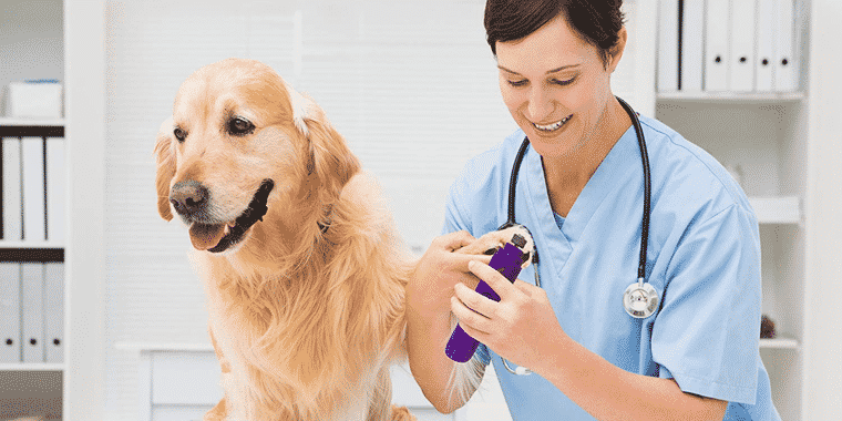 8 Best Dog Nail Grinders in 2019