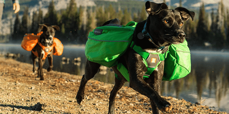 10 Best Dog Backpacks in 2019