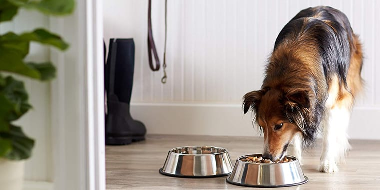 10 Best Dog Bowls in 2020