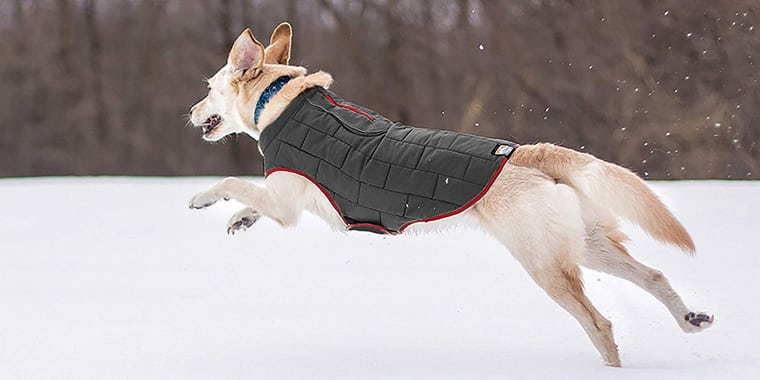 9 Best Dog Coats for Your Furry Friend in 2020