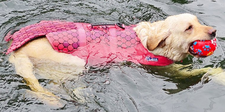 8 Best Dog Life Jackets to Buy in 2020