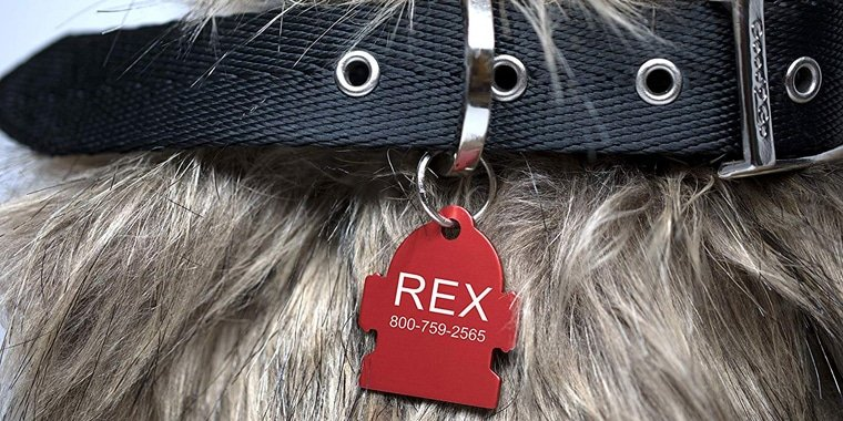 6 Best Dog Tags to Buy for Your Dog in 2020