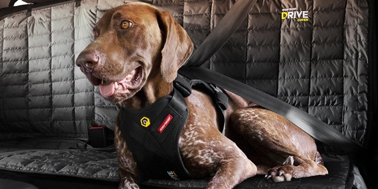 8 Best Dog Car Harnesses in 2019