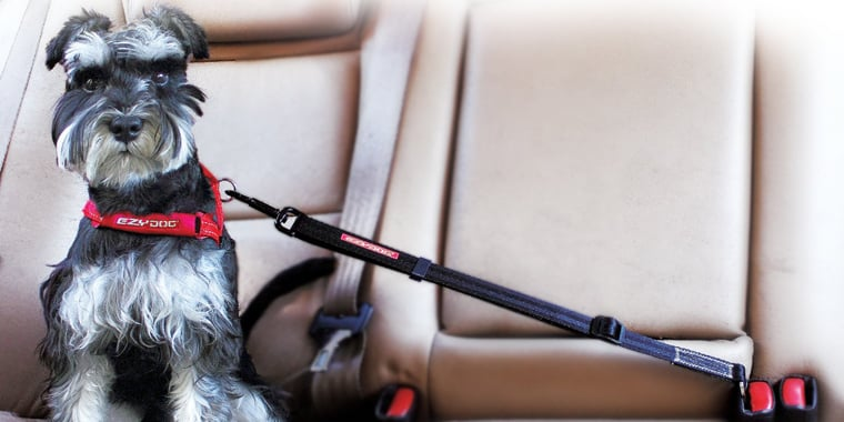 9 Best Dog Seat Belts in 2020