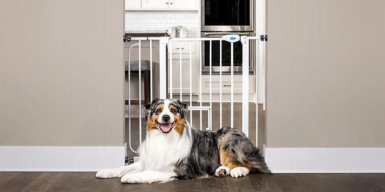 10 Best Dog Gates In 2019 For House Stairs Wide Openings