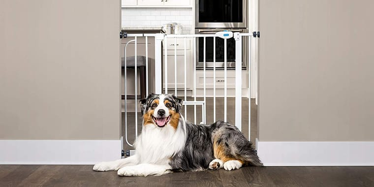 10 Best Dog Gates to Choose in 2020