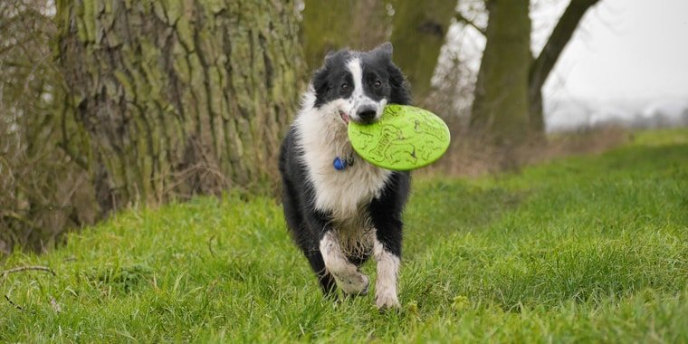 10 Best Dog Frisbees in 2020