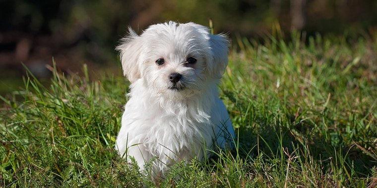 15 of the Cutest Dog Breeds