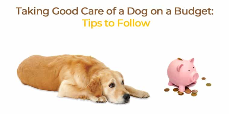 Taking Good Care of a Dog on a Budget: Tips to Follow