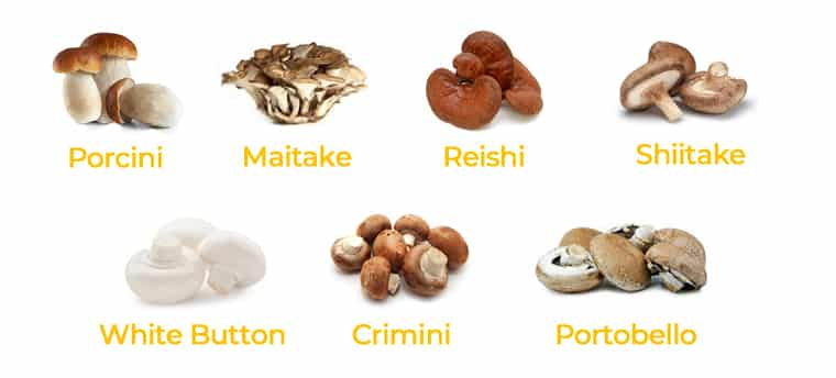 Which mushrooms can my dog eat