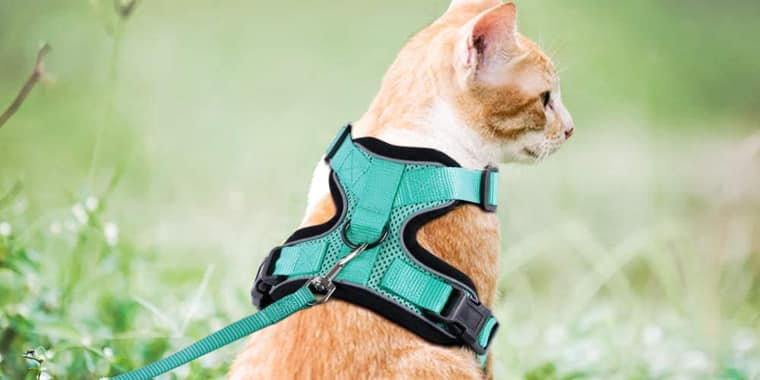 Rabbitgoo Cat Harness and Leash Set for Walking