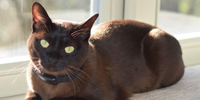 Best Flea Collar for Cats