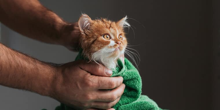 8 Best Flea Shampoos for Cats in 2020