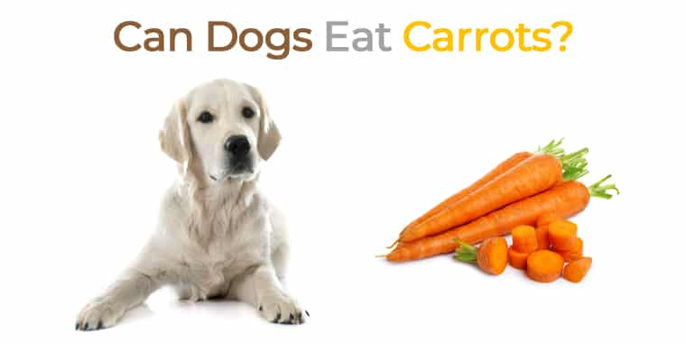 Can Dogs Eat Carrots?