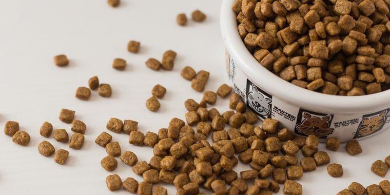 Best Cat Foods for Older Cats