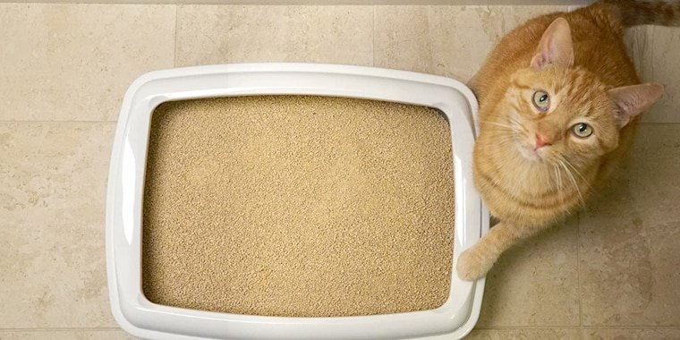 8 Best Cat Litters For Your Cat in 2020