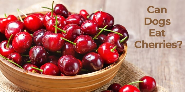 Can Dogs Eat Cherries?