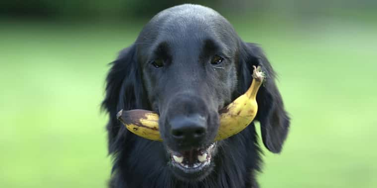 What Fruits Can Dogs Eat?