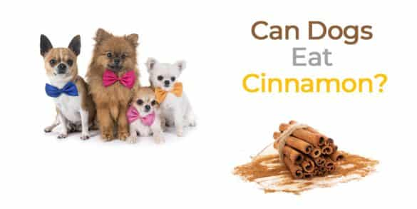 Can Dogs Eat Cinnamon