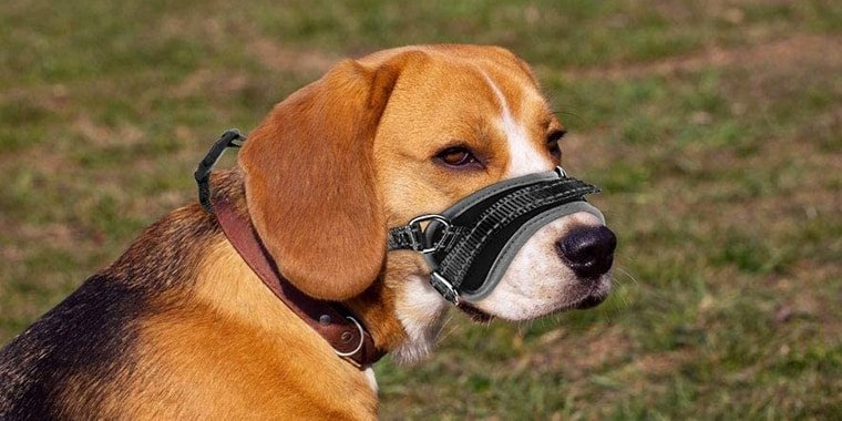 Effective Ways to Train a Dog to Wear a Muzzle