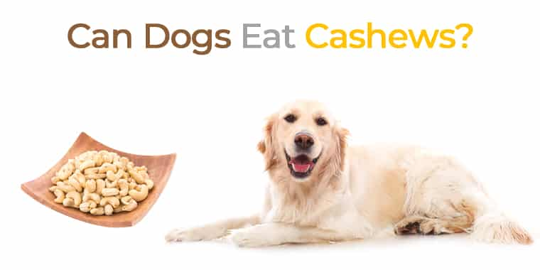 Can Dogs Eat Cashews? Everything You Need to Know