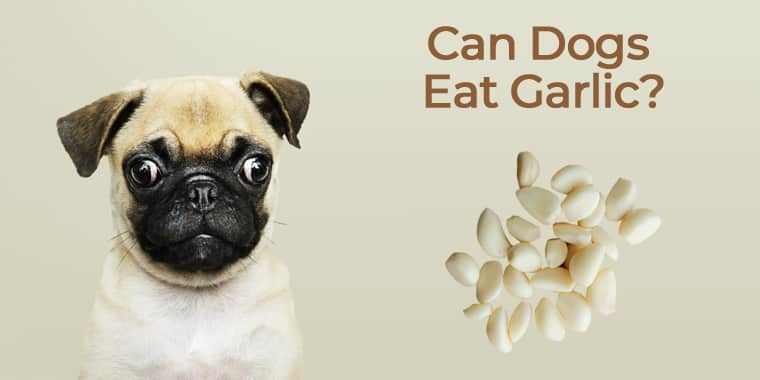 Can Dogs Eat Garlic?