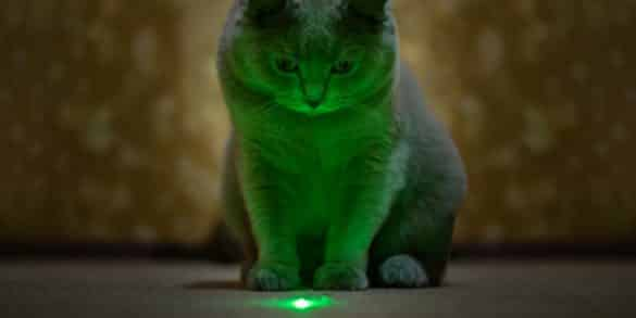 Why Do Cats Like Lasers