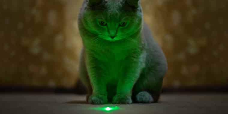 Why Do Cats Like Lasers?